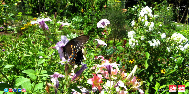 Some Tips For Creating A Garden That's Friendly To Pollinators