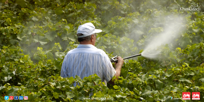 Why You Must Think Twice Before Using Organic Pesticides