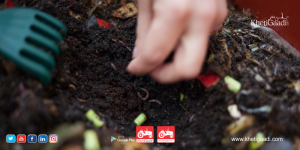 Soil life: How dramatically increase the productivity of your growing?