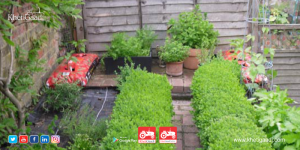 Growing Herbs At Home: When to water, How much sunlight needs