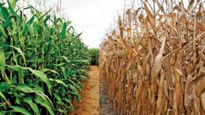An Adverse Effect of Climate Change on Agriculture and Crop Production