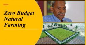 Zero Budget Natural Farming: Curse or Boon