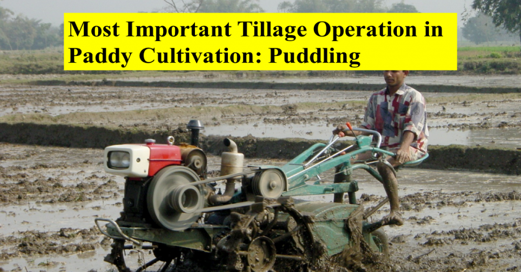 Most Important Tillage Operation in Paddy Cultivation: Puddling