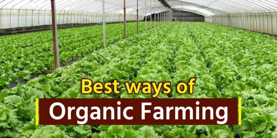 Organic Farming or Natural Farming