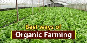 Best ways of Organic Farming