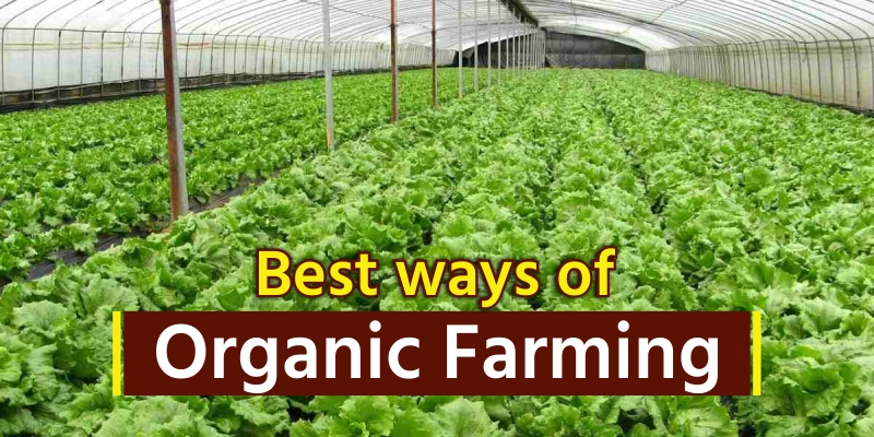 Best ways of Organic Farming