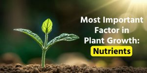 Most Important Factor in Plant Growth: Nutrients