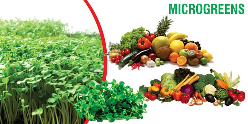 Microgreens: Multiple Times More Nutritious Than Fully Developed Vegetables