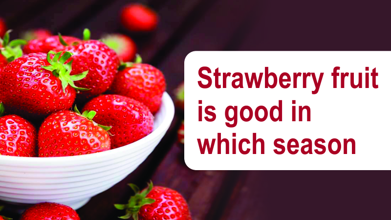 Strawberry Fruit Is Good In Which Season