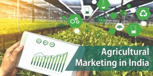 Agricultural Marketing in India: Issues and Required Reforms
