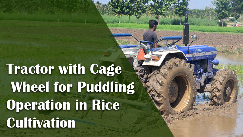 Tractor with Cage Wheel for Puddling Operation in Rice Cultivation