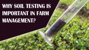 Why Soil Testing Is Important in Farm Management?