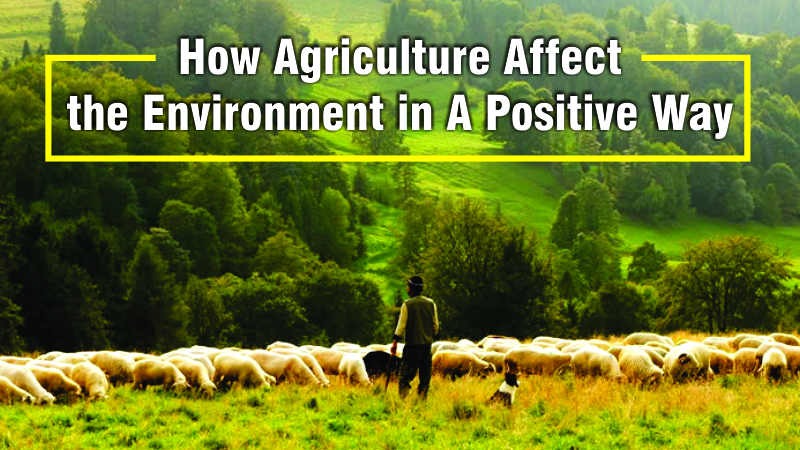 How Agriculture Affect the Environment in A Positive Way