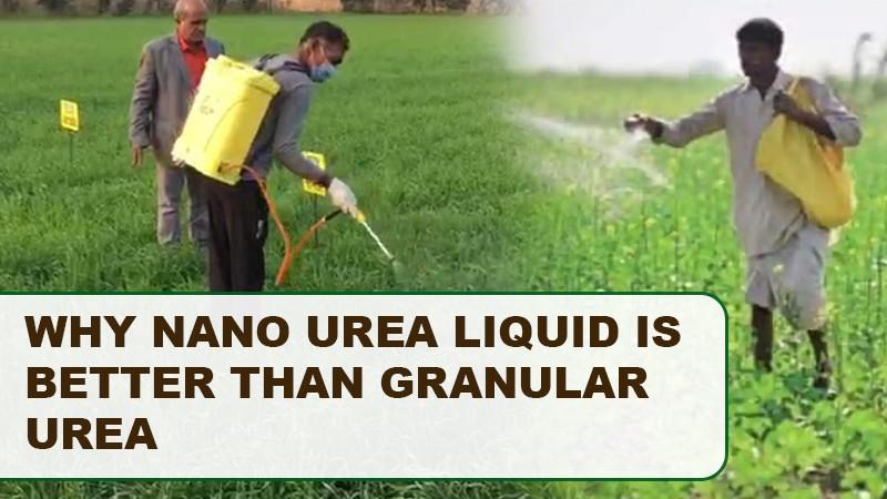 Why Nano Urea Liquid is Better Than Granular Urea