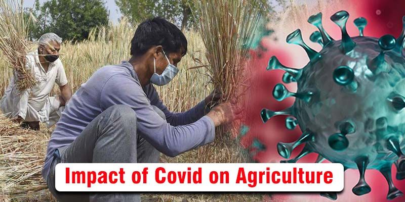 How Agriculture Sector Impacted by COVID -19 Pandemic