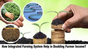 How Integrated Farming System Help in Doubling Farmer Income
