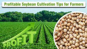 Profitable Soybean Cultivation Tips for Farmers