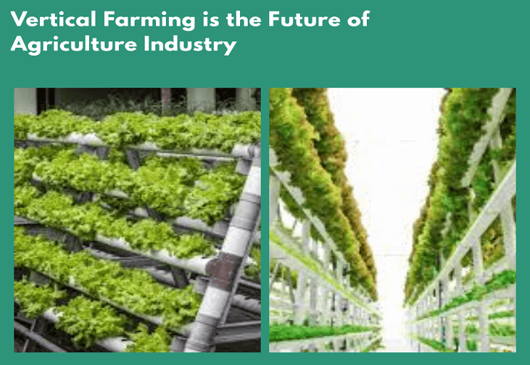 Vertical Farming is the Future of Agriculture Industry