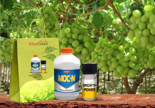 Branching and Tillaring Special Kit