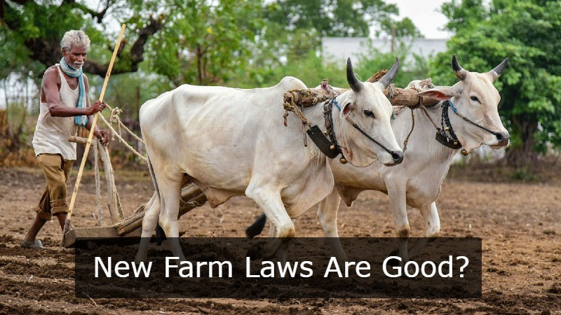 The Rise Of New Farm Laws In The New Era of Market Freedom