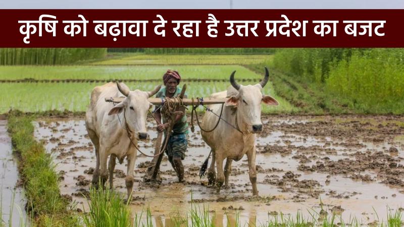 कृषि को बढ़ावा दे रहा है उत्तर प्रदेश का बजट