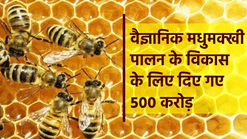 वैज्ञानिक मधुमक्खी पालन के विकास के लिए दिए गए ५०० करोड़