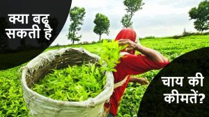 भारत में चाय का उत्पादन लगभग 10% घटा है; मूल्य में वृद्धि करने की सम्भावना