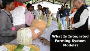 How Integrated Farming Helps In Increasing the Farmer's Income