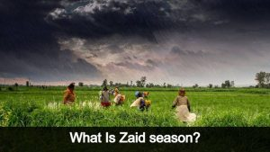 Rising Income Of Farmers In Zaid Season