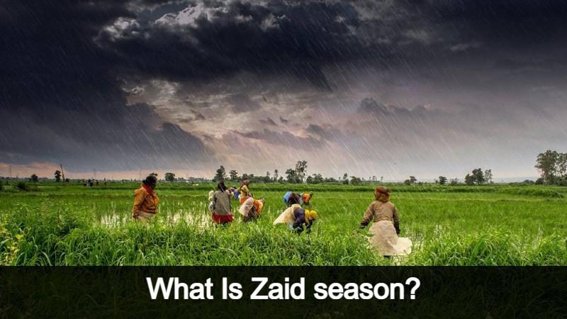 Rising Income Of Farmers In Zaid Season