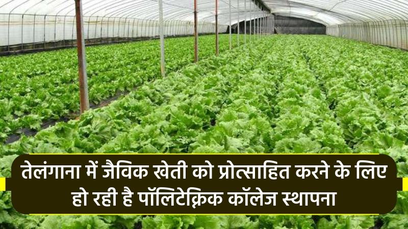 तेलंगाना में  जैविक खेती को प्रोत्साहित करने के लिए हो रही है पॉलिटेक्निक कॉलेज स्थापना