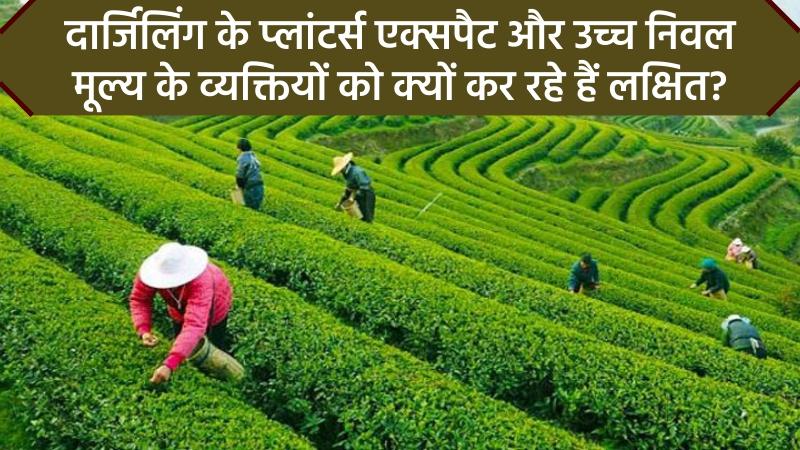 दार्जिलिंग प्रीमियम चाय को उच्च निवल मूल्य के व्यक्तियों और एक्सपैट्स द्वारा लक्षित किया जाएगा
