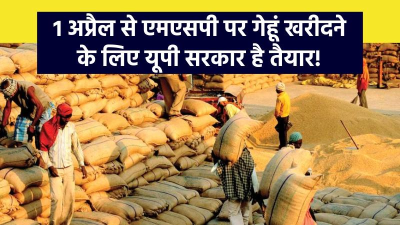 १ अप्रैल से एमएसपी पर गेहूं खरीदने के लिए यूपी सरकार है तैयार