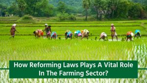 Reforming Laws Will Help In Promoting Agri Sector
