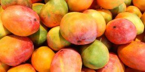 २०२१ में फलों के उत्पादन में रहेगी बढ़ोत्तरी