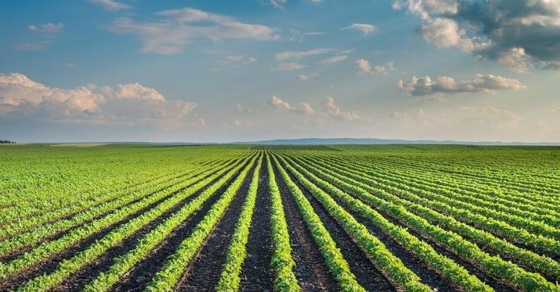 लाल चंद कटारिया : किसानों के लाभ के लिए राजस्थान में नए 'कृषि बजट' का शुभारंभ