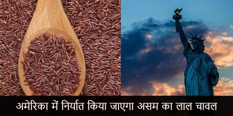 भारत से अमेरिका निर्यात हुआ 'लाल चावल'