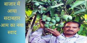 कोटा किसान द्वारा विकसित सदाबहार आम हुआ लोगों में प्रसिद्ध