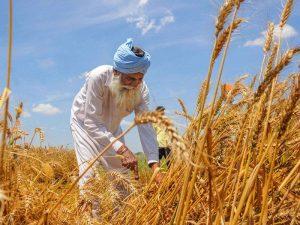 किसानों के जे-फॉर्म को संग्रहीत करने के लिए डिजीलॉकर का उपयोग करने वाला पंजाब पहला राज्य बना