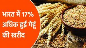 भारत में १७ प्रतिशत अधिक हुई गेहूं की खरीद
