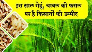 इस साल गेहूं, चावल की फसल पर है किसानों  की उम्मीद