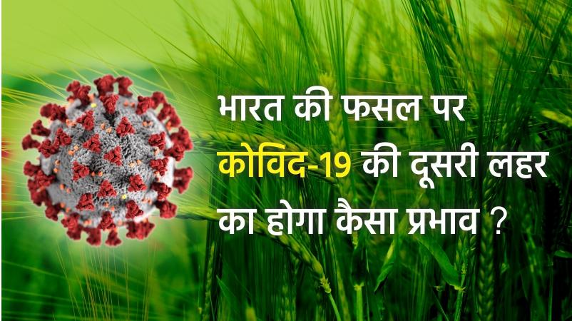कृषि फसल पर भारत के राज्यों में कोविद-१९ का असर देखने मिल रहा है