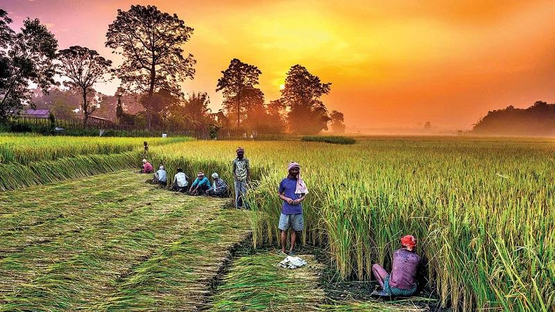 छत्तीसगढ़ के किसानों को मिलेगी 10,000 रुपये की सब्सिडी