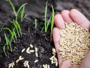 मानसून सत्र शुरू होने से पहले सभी जिलों के किसानो को बीज उपलब्ध कराने का लिया  फैसला : बादल