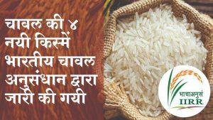 चावल की ४ नयी किस्में भारतीय चावल अनुसंधान द्वारा जारी की गयी