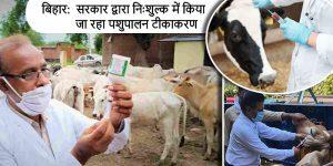 बिहार समेत अन्य राज्यों में सरकार द्वारा निःशुल्क में करवाया जा रहा पशुओं का टीकाकरण
